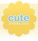 Cute_Overload